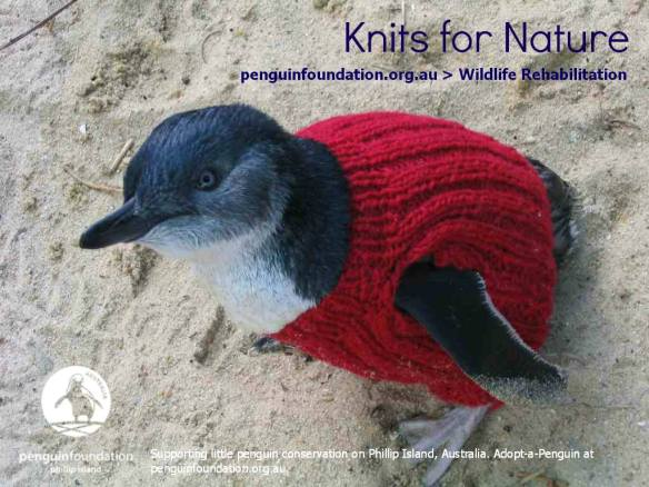 penguin-foundation-phillip-island-2